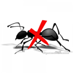 DIY Ant Killer & Exterminator Recommendation