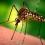 Hey Mosquitos…Suck THIS! Bite Prevention & Remedies