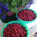 Did You Pick Too Many Raspberries? Freeze 'em!