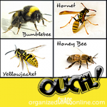 Differences in bumblebees, hornets, yellowjackets and honeybees | The Bees are Out There. Be Careful! Sting Prevention and Remedies | organizedCHAOSonline