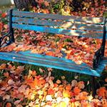Two Quick Steps to Prep Your Yard for Winter